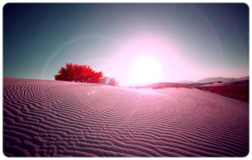 désert rose