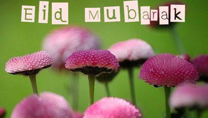 954_Eid